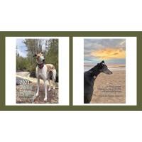 2021 Celebrating Greyhounds Weekly Desk Calendar
